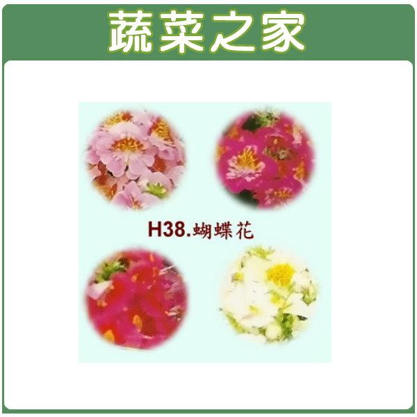 【蔬菜之家】H38.蝴蝶花種子(高40cm)60顆