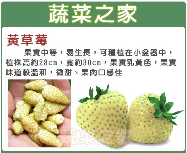 【蔬菜之家】I09.黃草莓種子