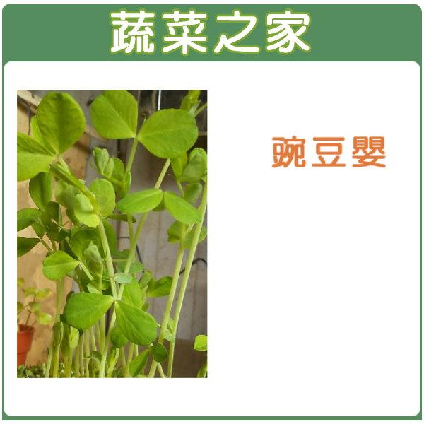 【蔬菜之家】J05.豌豆嬰(芽菜種子)種子 30克