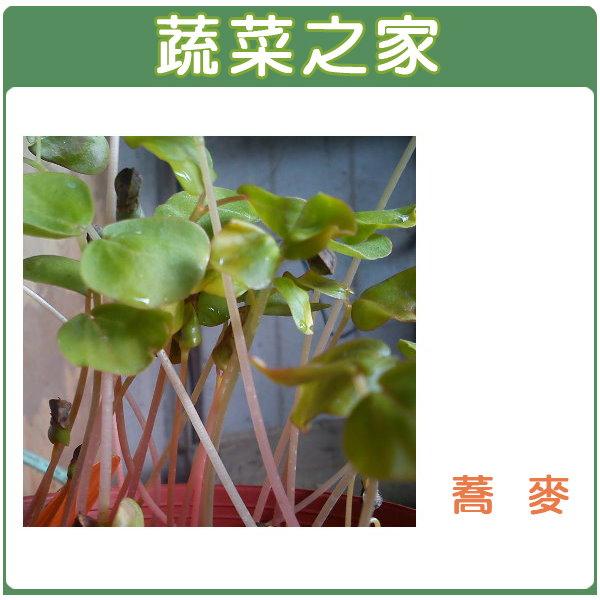 【蔬菜之家】J06蕎麥種子30克