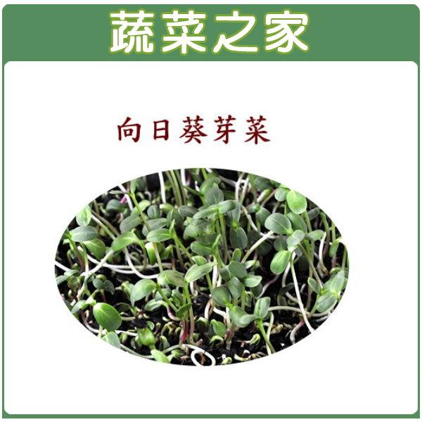【蔬菜之家】J08.向日葵(芽菜種子)20克