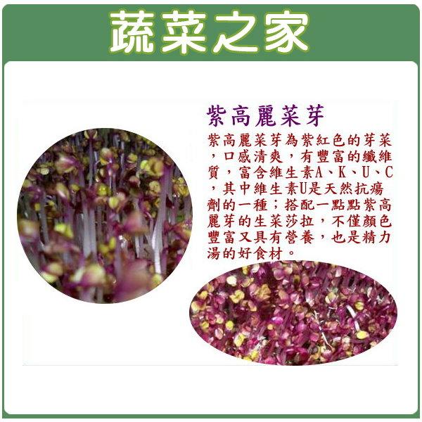 【蔬菜之家】J12.紫高麗菜芽(芽菜種子)1000顆