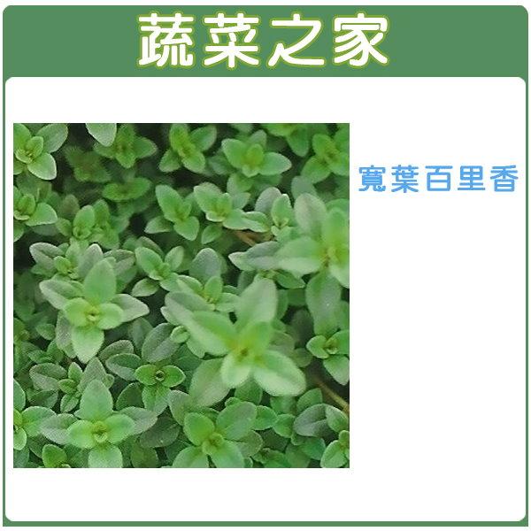 【蔬菜之家】K01.寬葉百里香種子200顆