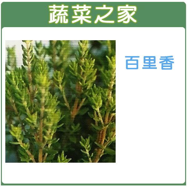 【蔬菜之家】K02.百里香種子200顆