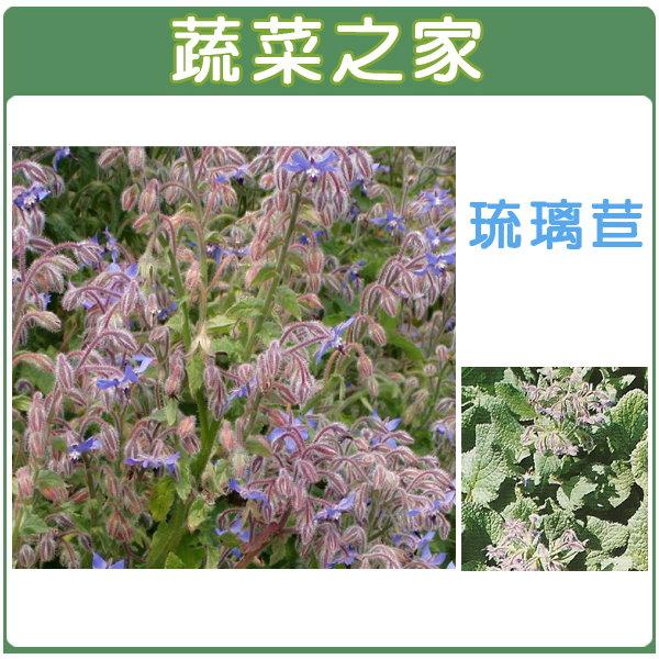 【蔬菜之家】K11.琉璃苣種子40顆