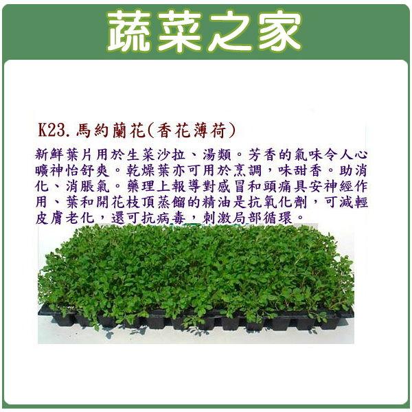 【蔬菜之家】K23.馬約蘭花種子(香花薄荷)1000顆