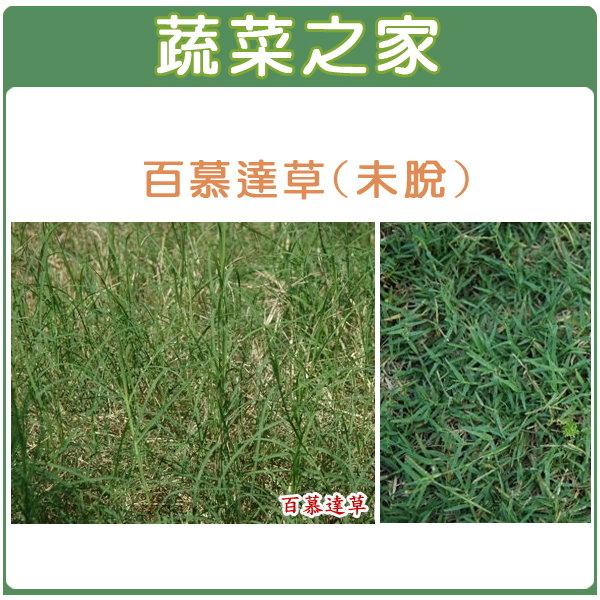 【蔬菜之家】M02.百慕達草(未脫殼)種子25000顆