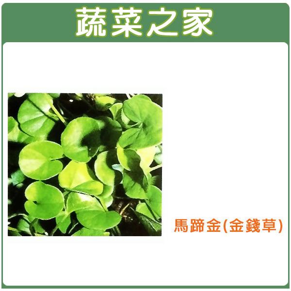 【蔬菜之家】M08.馬蹄金種子(金錢草)