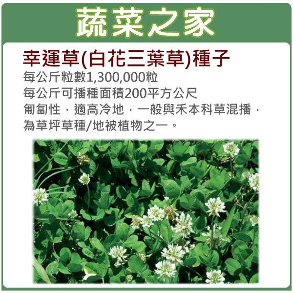 【蔬菜之家】M09.幸運草(白花三葉草)種子7500顆