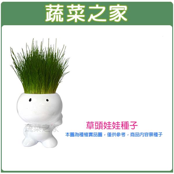 【蔬菜之家】00M10達冠草種子300克