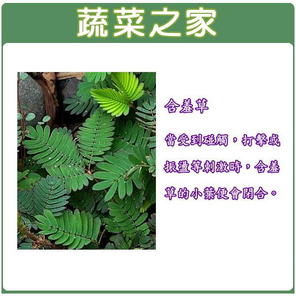 【蔬菜之家】P02.含羞草種子50顆 (含羞)