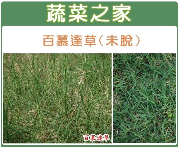 【蔬菜之家】百慕達草種子(未脫殼)1公斤裝