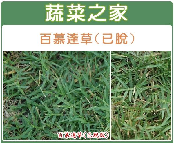 【蔬菜之家】百慕達草種子(已脫殼)1公斤裝