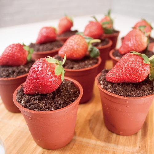 草莓盆栽提拉米蘇(一盒10入$490)