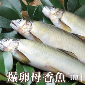 【築地藏鮮】宜蘭冷泉爆卵母香魚 (100g/尾)