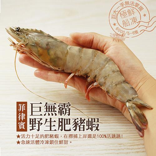 【築地一番鮮】野生鮮Q肥豬蝦1盒(20-23尾/淨重600g/盒)-任選