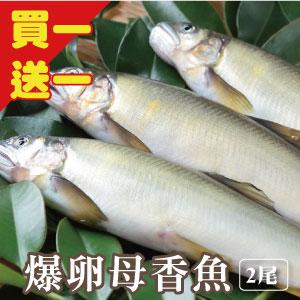 【築地藏鮮】宜蘭冷泉爆卵母香魚 (100g/尾) 2入組 →  買一「份」送一「份」→ 總共4尾,平均一尾只要$84