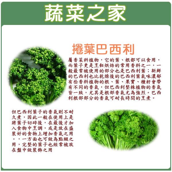 【蔬菜之家】F11.捲葉巴西利300顆種子 (西洋香菜、歐芹)