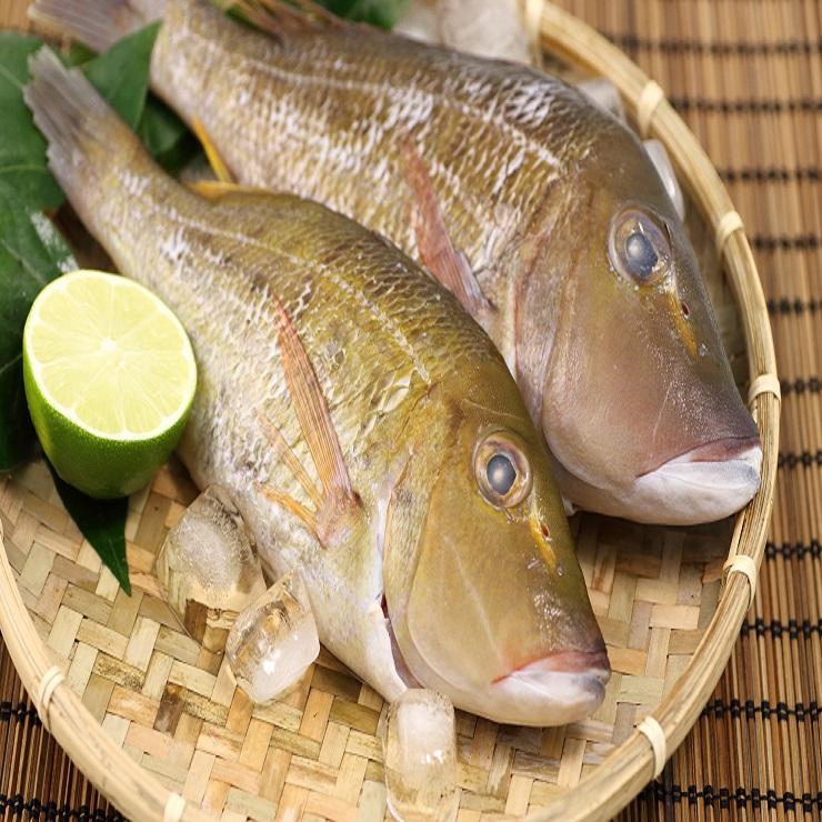 【龍占(針)魚】1尾(300-400克) ▶優鮮漁舖 Fish Golden
