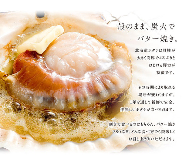 ㊣盅龐水產 ◇日本空運活體扇貝◇300g±10%/顆  扇貝 帆立貝 烤肉 火鍋 餐廳 批發 團購