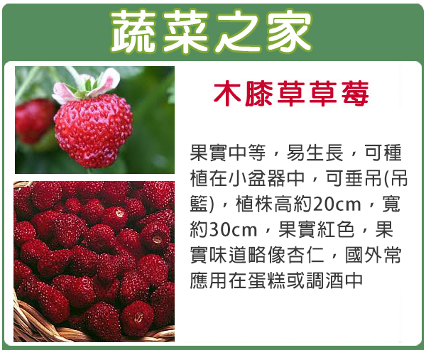 【蔬菜之家】I06木膝草草莓種子8顆