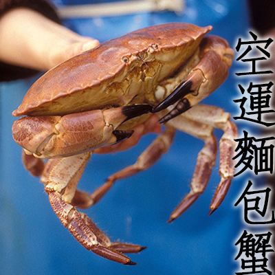㊣盅龐水產◇空運麵包蟹(活體)◇ 1000g±10% 超多蟹黃 霸王蟹 零售$800/隻 團購 批發