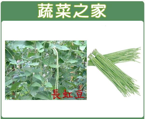 【蔬菜之家】E08.長豇豆(白仁菜豆)種子50顆