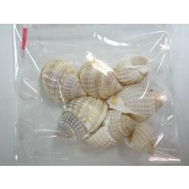 貝殼(織紋螺)/一小包入{定10}