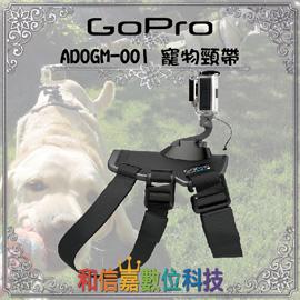 【GoPro 配件】寵物頸帶 ADOGM-001 Fetch (Dog Harness) Hero4 極限運動攝影 公司貨 原廠保固一年