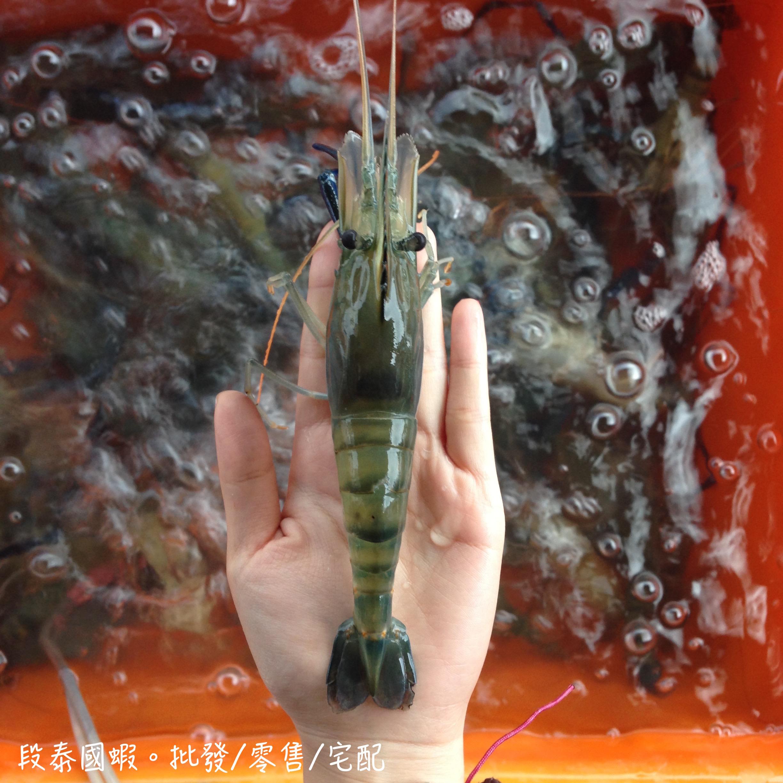 激推必買♥段泰國蝦精選,想吃大蝦選這款,泰國蝦-A級(1斤裝)