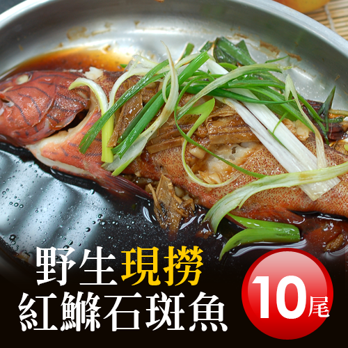【築地一番鮮】峇里島野生紅鰷魚X10尾(250±50g/尾)