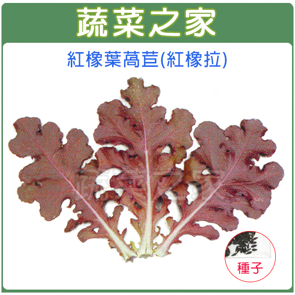 【蔬菜之家】A79.紅橡葉萵苣種子500顆(紅橡拉)