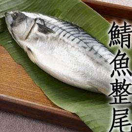 ㊣盅龐水產 ◇整隻挪威鯖魚(原料)◇600g±10%/隻  每隻$180 挪威產 保證全場最低 團購 批發 燒烤