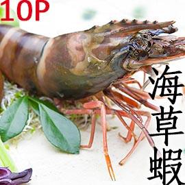 ㊣盅龐水產 ◇越南草蝦10隻裝◇ 450g/盒 烤肉 火鍋 餐廳 團購 歡迎批發