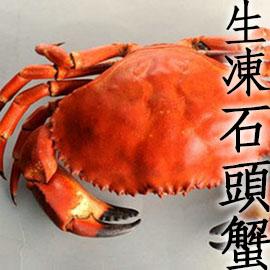 ㊣盅龐水產◇熟凍石頭蟹800/900◇超多蟹黃 霸王蟹 零售$399/隻 團購 批發