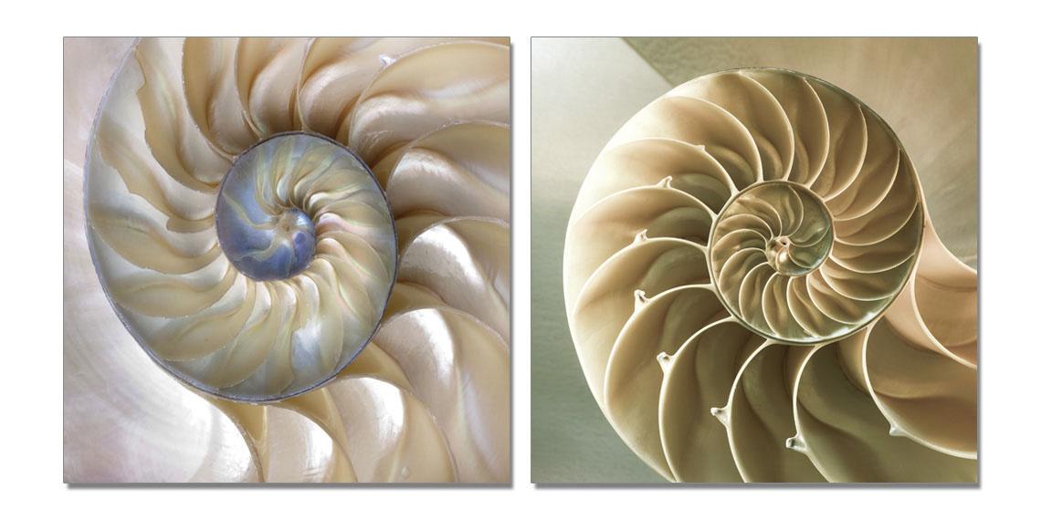 聚鯨Cetacea﹡Art【貝殼TC-49610AB印製畫】無框畫 裝飾掛畫 商業空間 居家裝飾 客廳 寢室