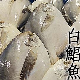 ㊣盅龐水產◇超大白鯧魚7/8◇ 700g-800g/尾 $1070/尾 新年 年菜 尾牙 圍爐