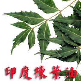 百翠氏苦楝葉油頂級印度楝樹葉油~neem leaf oil (150ml)基底油~基礎油~植物油~乾皮皮在癢保養聖品-spa推拿-手工皂添加-diy調配