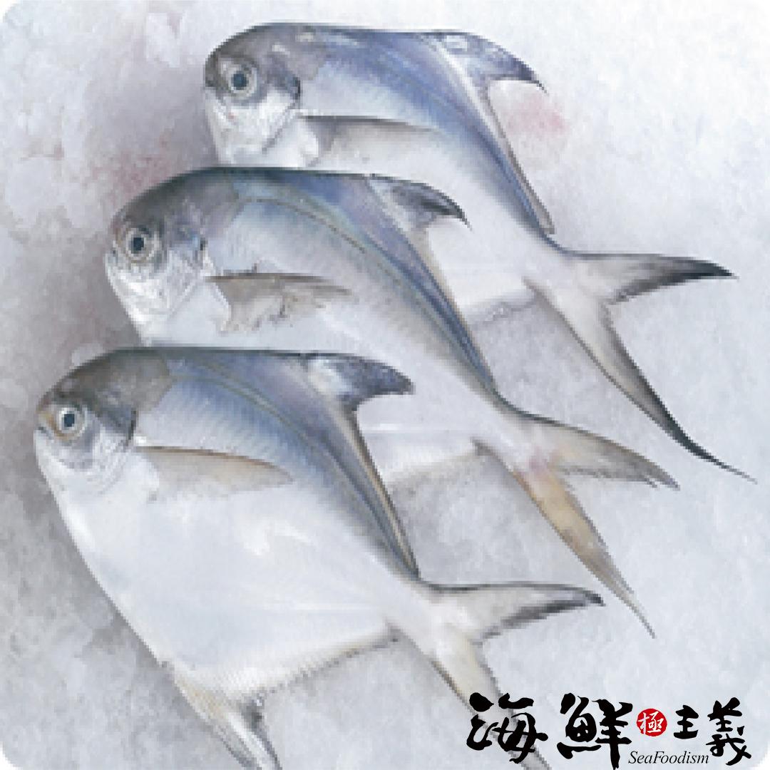 【海鮮主義】大白鯧魚 500-600g/尾 ?白鯧念起來有「昌榮」之意,煎了之後呈金黃色十分討喜,擺放在餐桌上很有好兆頭,肉質又鮮美,成為過年必買的魚種