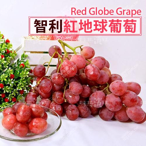 補貨中【台北濱江】智利紅地球葡萄 1KG裝