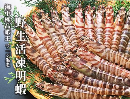 澎湖野生大明蝦8尾入