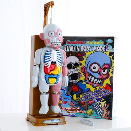 放學後的怪談系列 人體模型 人體模型器官 器官組裝 人體器官 聚會遊戲 派對遊戲 玩具 桌遊【B062084】