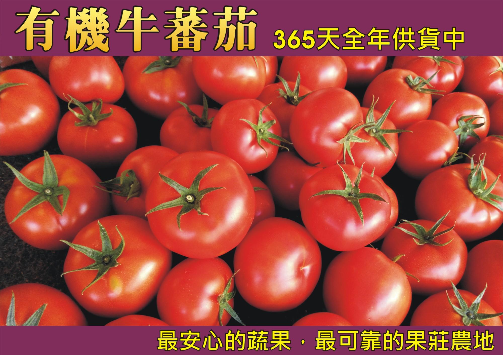 有機牛蕃茄(全年供貨)