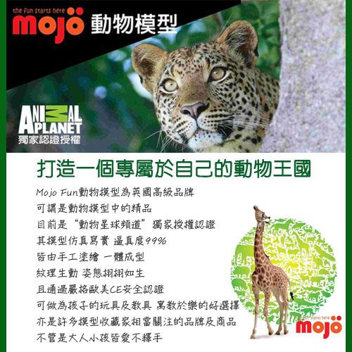 about_mojo.jpg
