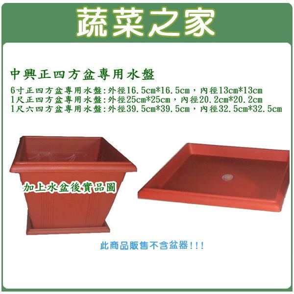 【蔬菜之家015-F81】中興6吋正四方盆專用水盤磚紅色
