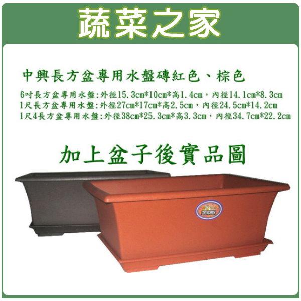 【蔬菜之家015-F88】中興6寸長方盆專用水盤磚紅色、棕色
