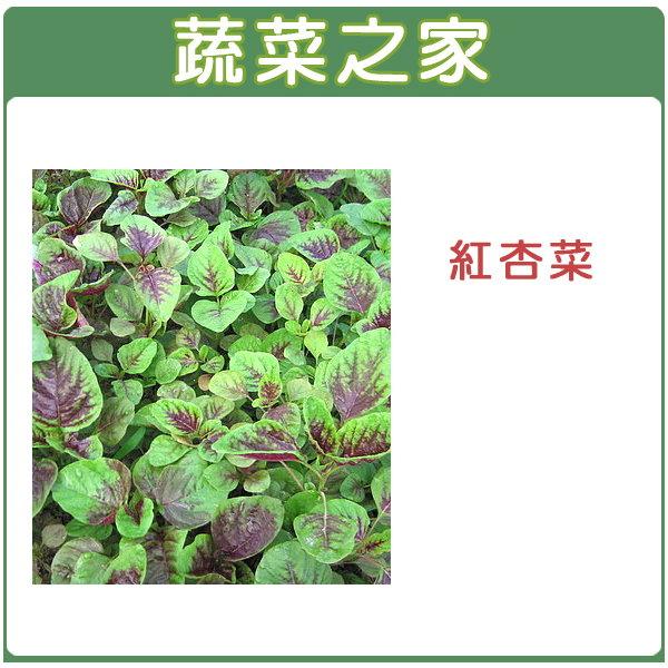 【蔬菜之家】A12.紅杏菜種子15000顆