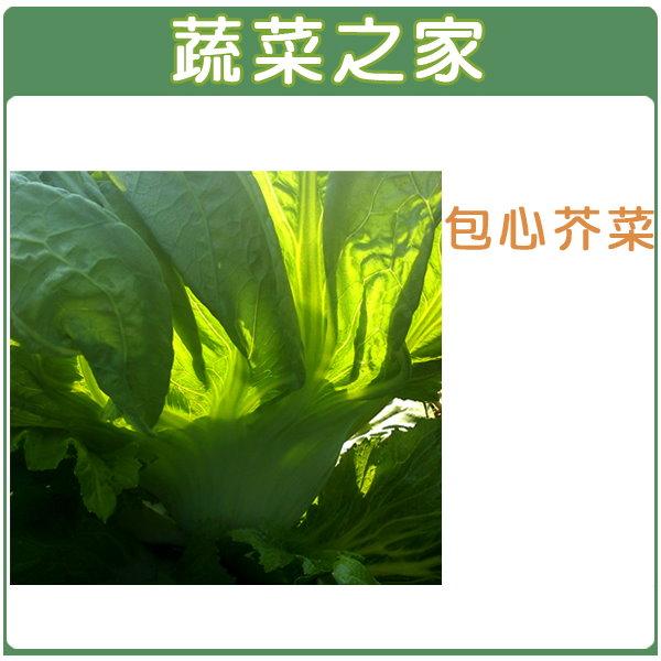 【蔬菜之家】A26.包心芥菜種子 (長年菜)1000顆