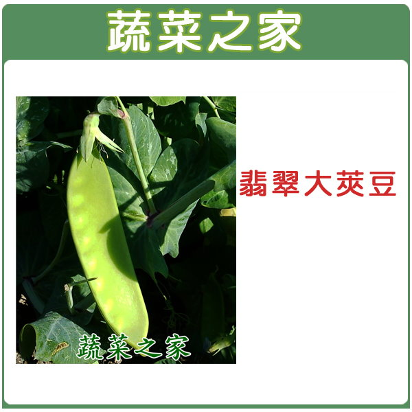 【蔬菜之家】E04.翡翠大莢豆(改良種)種子 30顆