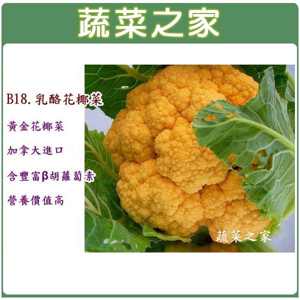 【蔬菜之家】B18.乳酪花椰菜3顆(黃金花椰菜)